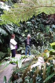 180227 Ormbunksrummet i Edvard Andersons växthus