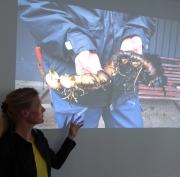Tina Westerlund rhizonm föröka sköldbräcka foto Eva Rönnblom DSC07483
