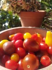 20200913-orres-tomater