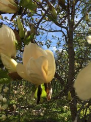 210518-magnolior-2