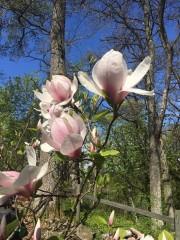 210518-magnolior-4